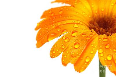 Yellow Flower Closeup Art Print