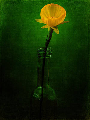 Photograph - Yellow Flower In A Bottle I by Marco Oliveira
