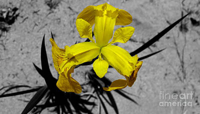Photograph - Yellow Flower by Joshua Lucas