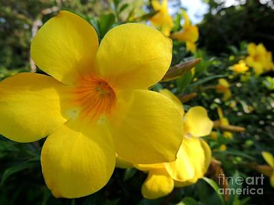 Art Print featuring the photograph Yellow Flower by Kristine Merc