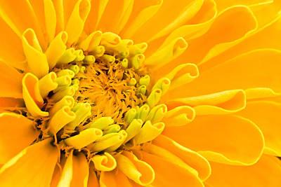 Photograph - Yellow Flower Macro by Ben Graham