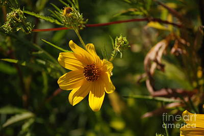 Photograph - Yellow Flower by Mark McReynolds