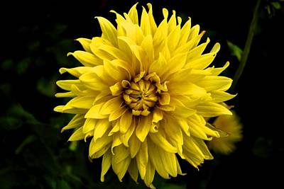 Photograph - Yellow Flower by Matt Harang