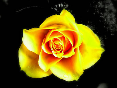 Yellow Flower On A Dark Background Art Print