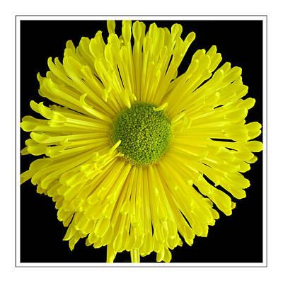 Wall Art - Photograph - Yellow Flower Pattern by Jack Daulton