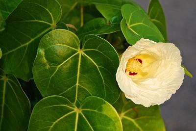 Photograph - Yellow Flower by Ricardo J Ruiz de Porras