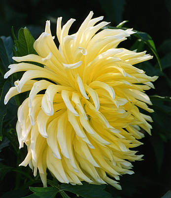 Photograph - Yellow Flower by Robert Lozen