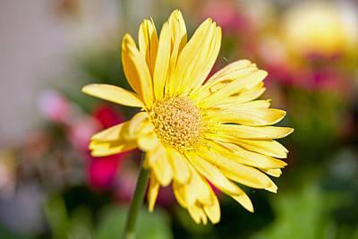 Yellow Flower Art Print