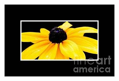 Photograph - Yellow Flower by Susan Parish Designs