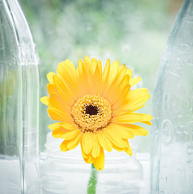 Ledge Photograph - Yellow Flower by Tom Gowanlock
