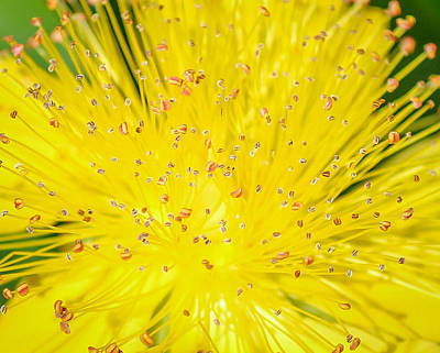 Art Print featuring the photograph Yellow Flower  by Trace Kittrell