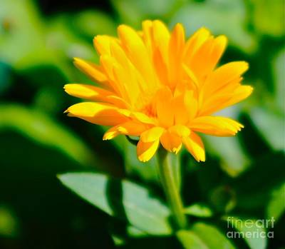 Photograph - Yellow Flower by Tracey McQuain