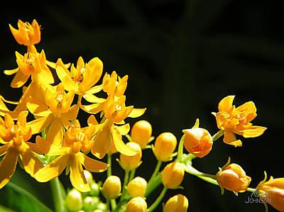 Photograph - Yellow Flowers by Adam Johnson