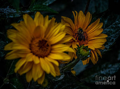 Photograph - Yellow Flowers And Bee by Ronald Grogan