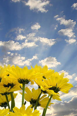 Photograph - Yellow Flowers And Sky by Melinda Fawver