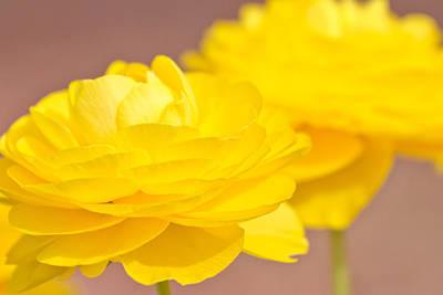 Photograph - Yellow Flowers by Ben Graham