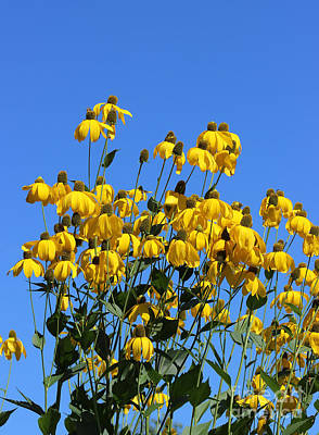 Photograph - Yellow Flowers Blue Sky by Karen Adams