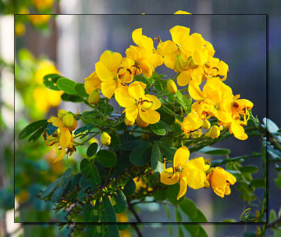 Photograph - Yellow Flowers by Chris Thomas