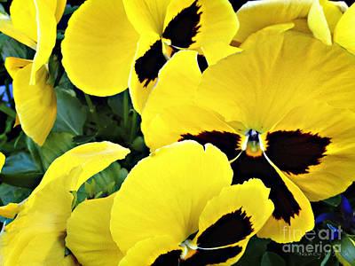 Amy Weiss - Yellow Flowers by Nancy Stein
