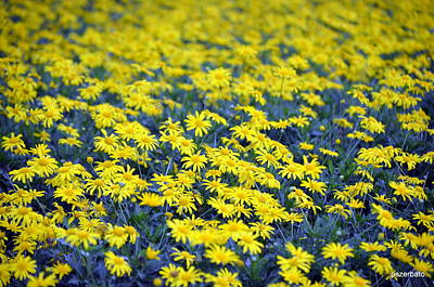 Photograph - Yellow Flowers by Paulo Zerbato