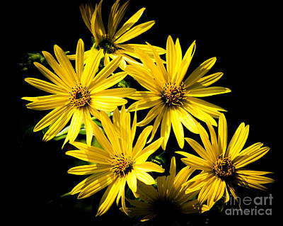 Photograph - Yellow Flowers by Ronald Grogan