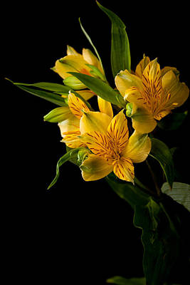 Art Print featuring the photograph Yellow Flowers by Sennie Pierson