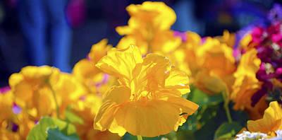 Photograph - Yellow Flowers by Sumit Mehndiratta