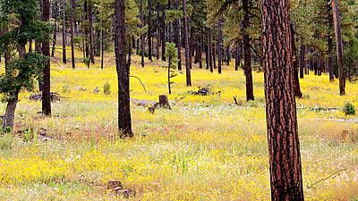 Yellow Forest Art Print by Kume Bryant