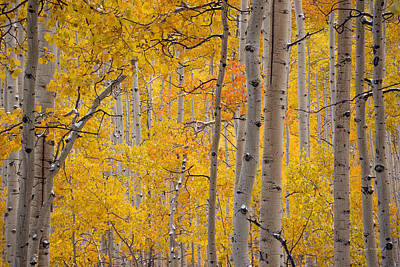Yellow Forest Art Print by Leland D Howard