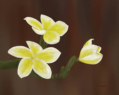 Yellow Frangipani Art Print by Tim Stringer