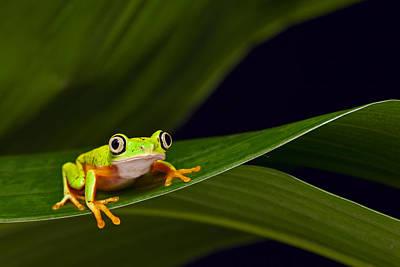 Photograph - Yellow Frog by Dirk Ercken