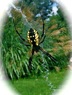 Yellow Garden Spider Art Print by Linda Walker