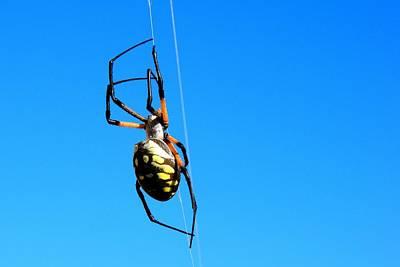 Photograph - Yellow Garden Spider by Marilyn Burton