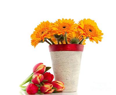 Yellow Gerber Flower Art Print