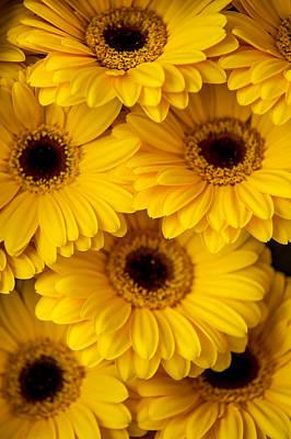 Photograph - Yellow Gerbera 1. Amsterdam Flower Market by Jenny Rainbow