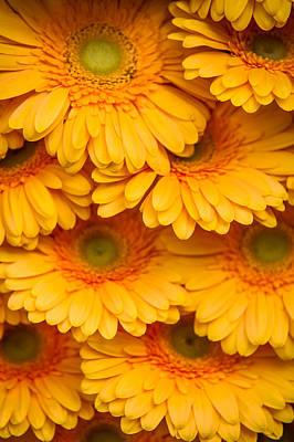 Photograph - Yellow Gerbera 2. Amsterdam Flower Market by Jenny Rainbow