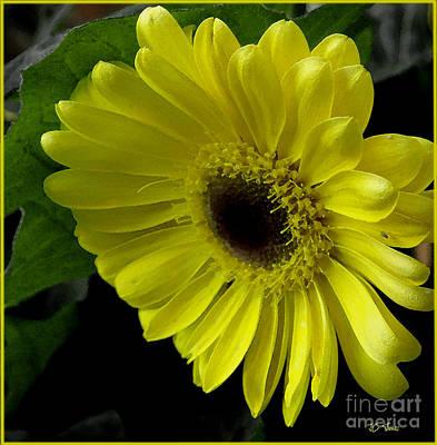Photograph - Yellow Gerbera Daisy  by James C Thomas