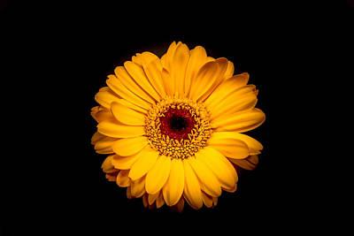 Pasta Al Dente - Yellow Gerbera Daisy by Xenia Headley