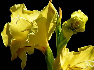 Photograph - Yellow Gladioli Flowers by Rose Santuci-Sofranko