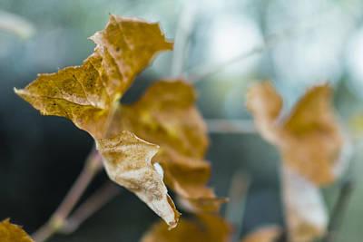 Photograph - Yellow Grape Leaf Closeup by Vlad Baciu