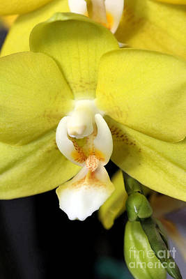 Photograph - Yellow Green And White by Mary Haber