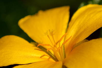 Photograph - Yellow by Greg Allore
