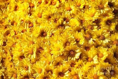 Photograph - Yellow Haze by AK Photography