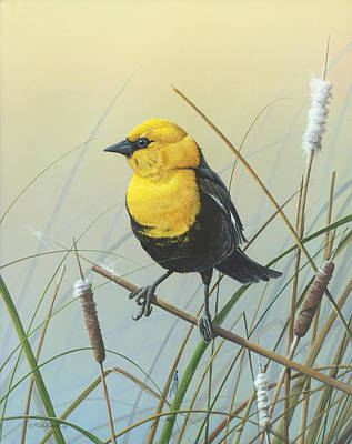 Painting - Yellow-headed Black Bird by Mike Brown