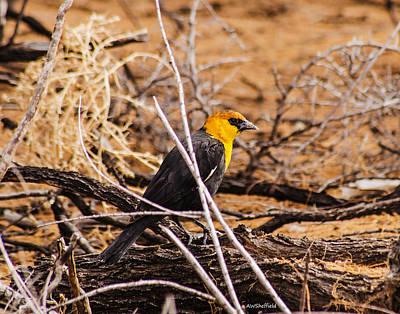 Photograph - Yellow-headed Blackbird by Allen Sheffield