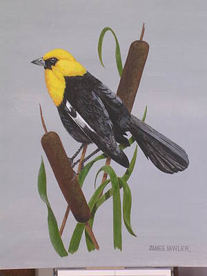 Painting - Yellow-headed Blackbird by James Lawler