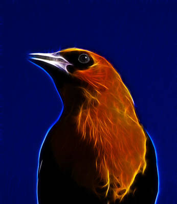 Blackbird Mixed Media - Yellow Headed Blackbird by Shane Bechler