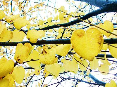 Photograph - Yellow Hearts by Tara Lowry