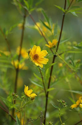 Photograph - Yellow by Heidi Poulin