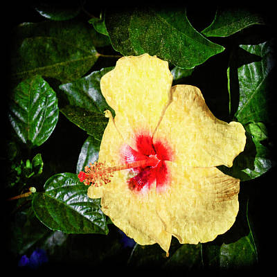 Photograph - Yellow Hibiscus by Crystal Wightman